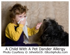 Pet Dander Allergy